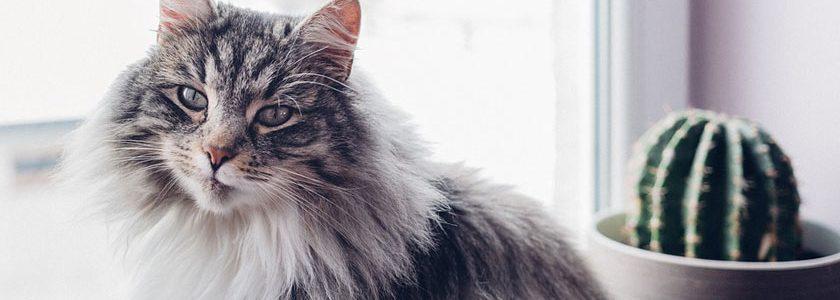 Cat in Home